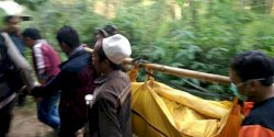 Sepekan Pelajar SMP Hilang di Gunung Piramid, Jenazah Ditemukan Terjepit di Pohon