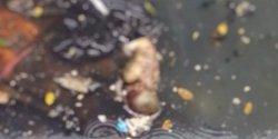 Mayat Bayi Ditemukan Di Saluran Drainase Jalan Satangnga
