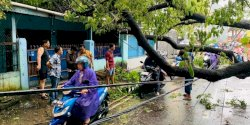 Gerak Cepat Camat Mariso Tangani Pohon Tumbang