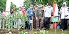 Mentan SYL Tinjau Progam P2L di Kabupaten Gowa